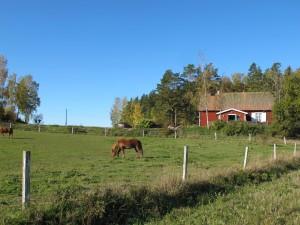 Gullbron med hästhagen